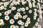 Massif fleurit